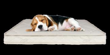 latex dog mattress
